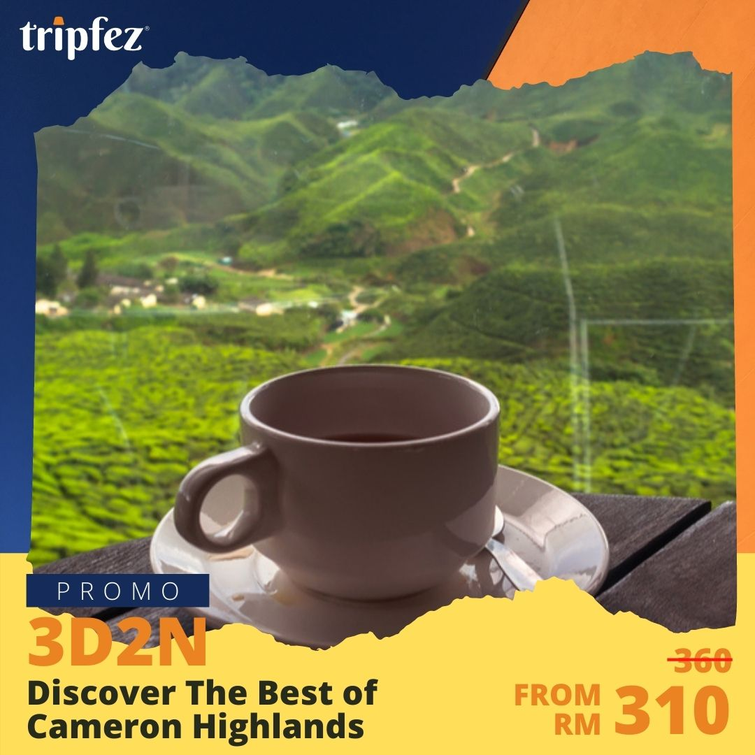 Discover The Best of Cameron Highlands